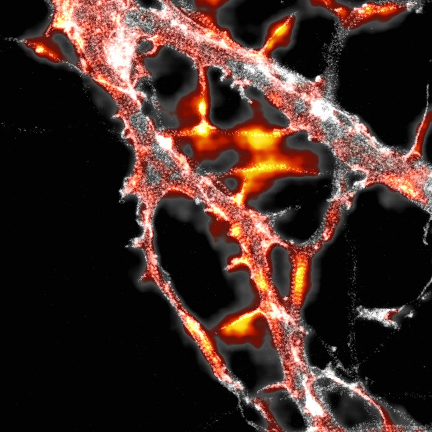 NeuronalActinLattice_QualityMap.jpg