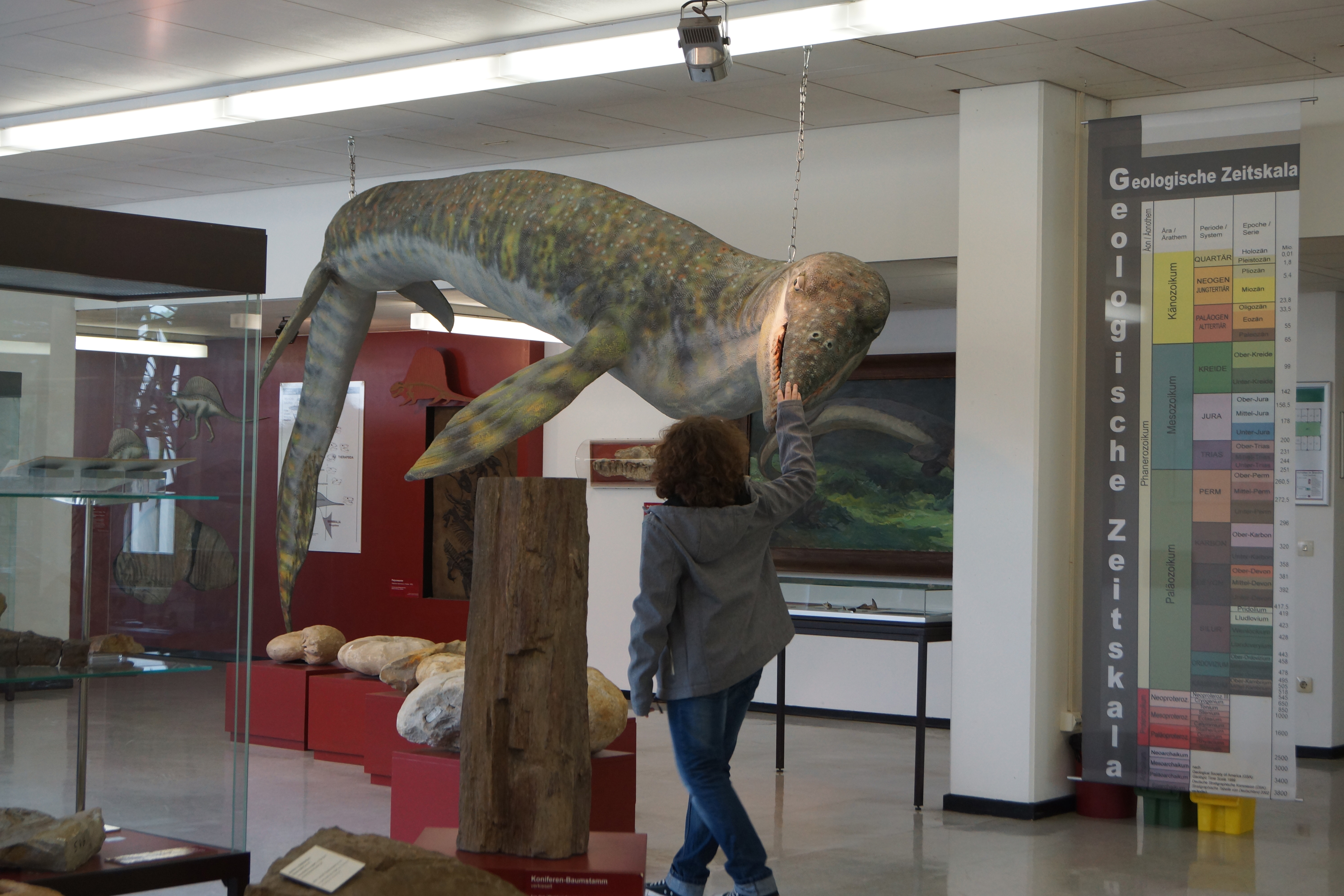 Mosasaurier_Museum_GZG.jpg